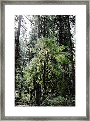 The Tree In The Forest Framed Print