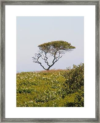 The Tree Framed Print by James McAdams