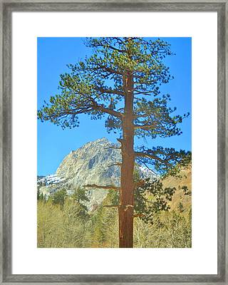 Framed Print featuring the photograph The Tree by Marilyn Diaz
