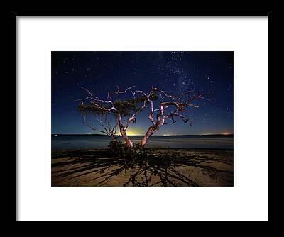 Mangrove Framed Prints