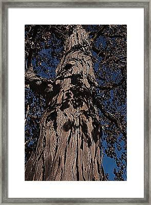 Framed Print featuring the photograph The Tree Of Life by Deborah Klubertanz