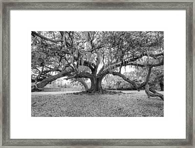 The Tree Of Life Monochrome Framed Print by Steve Harrington