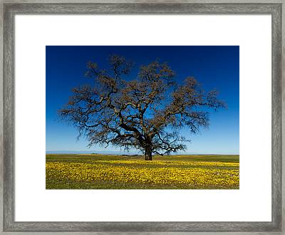 The Tree On Table Mountain Framed Print