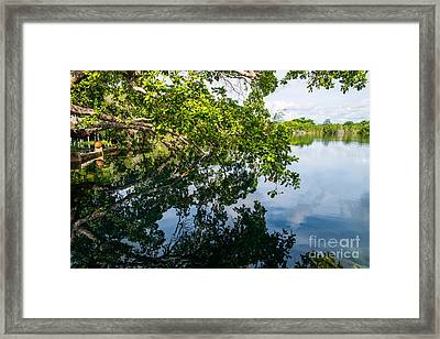 The Tree On The Cenote Framed Print