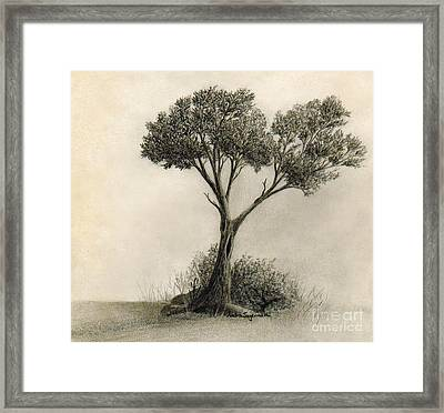 The Tree Quietly Stood Alone Framed Print by Audra D Lemke