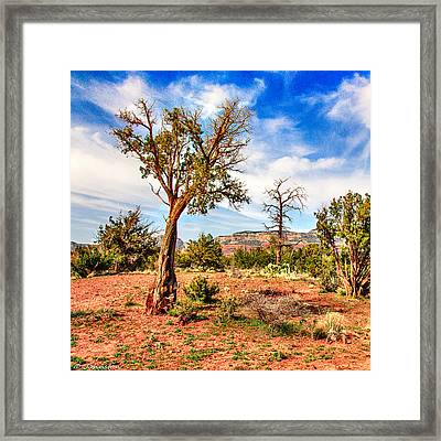 The Tree Sedona Secret Mountain Wilderness Framed Print by Bob and Nadine Johnston