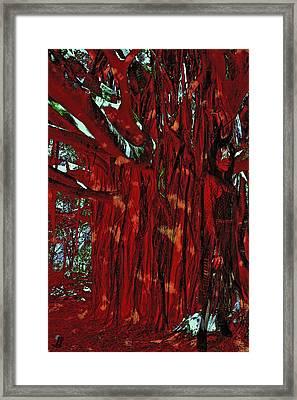 The Tree Spirit Framed Print by Linda Sannuti