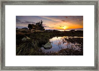 The Tree Stump Framed Print by Alexis Birkill