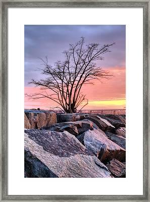 The Tree V Framed Print