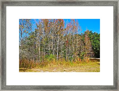 The Trees Framed Print by Cyril Maza