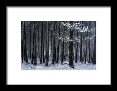 Hoarfrost Framed Prints