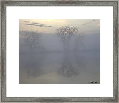The Trees Of Avalon Framed Print