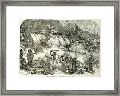 The Trepang Framed Print
