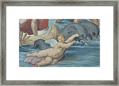 The Triumph Of Galatea Framed Print by Raphael