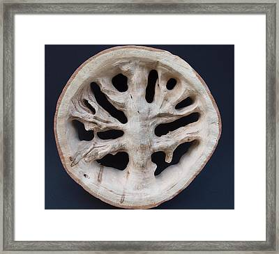The Trunk Of Time Framed Print