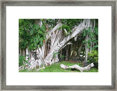 The Trunks Framed Print