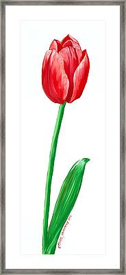 The Tulip Framed Print by Kate Holloman