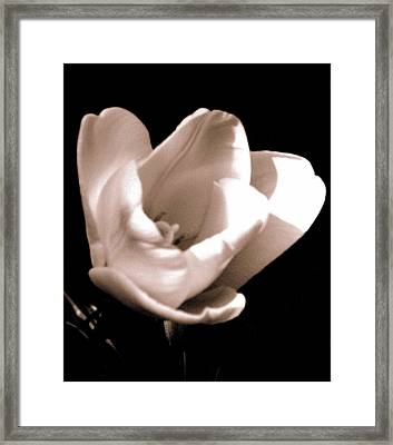 'the Tulip' Framed Print