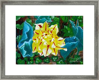 The Tulip Framed Print by Olga R