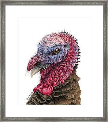The Turkey Framed Print