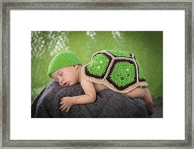The Turtle On The Rock Framed Print
