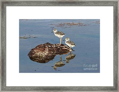 The Twins Framed Print by Jennifer Zelik