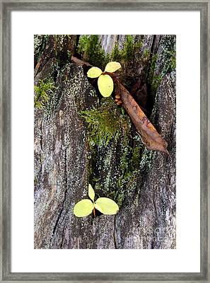 The Two In The Bark Framed Print