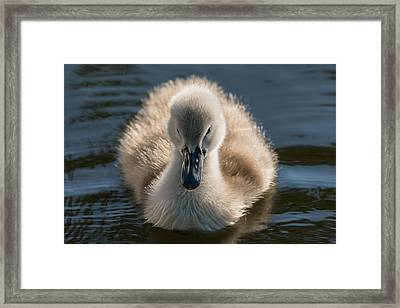 The Ugly Duckling Framed Print by Michael Mogensen