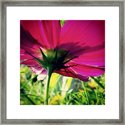 The Under Side Of Life Framed Print