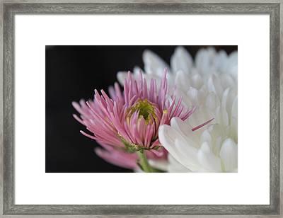 The Unique Flower Framed Print