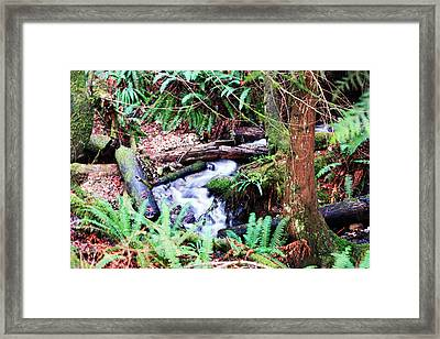 The Unknown Creek Framed Print