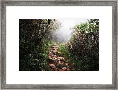 Light The Path Framed Print