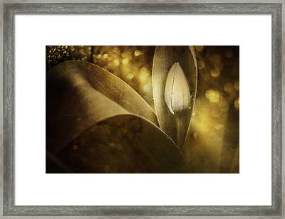 The Unveiling 2 Framed Print by Scott Norris