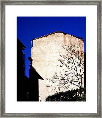 The Urban Tree Framed Print by Shaun Higson