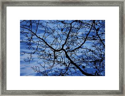 The Veins Of Time Framed Print by Andrew Pacheco