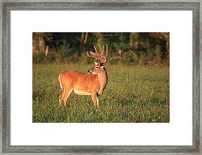 Framed Print featuring the photograph The Velvet King by Doug McPherson