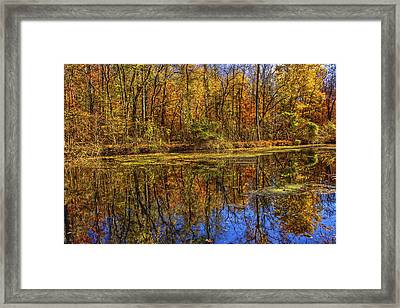 The Vibrancy Of Leaves Framed Print