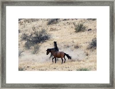 The Victor Framed Print by Mike  Dawson