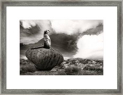 Framed Print featuring the photograph The View by Christine Sponchia