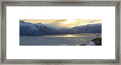 The View Of A Dall Sheep Framed Print by Tim Grams