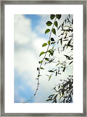 The Vine Framed Print by Stephanie Grooms