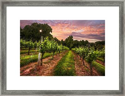 The Vineyard At Sunset Framed Print by Debra and Dave Vanderlaan