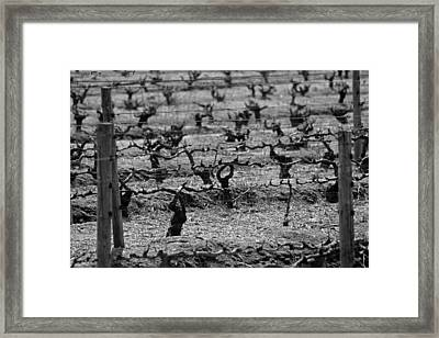 The Vineyard Framed Print by Chris Whittle
