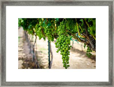 The Vineyard Framed Print by David Morefield