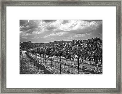 The Vineyard Framed Print by Kristina Deane