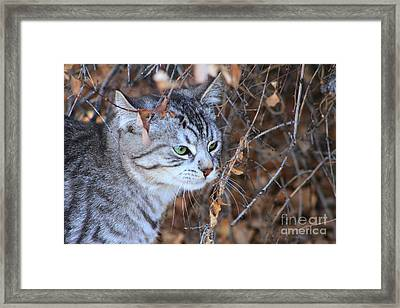The Visitor Framed Print by Alyce Taylor