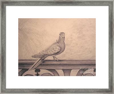 The Visitor Framed Print by Sara Antonino