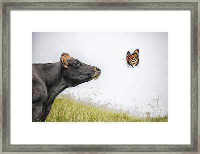 The Visitor  Framed Print by Sheila Smart Fine Art Photography
