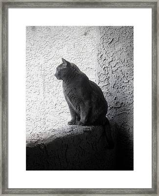 Framed Print featuring the photograph The Visitor by Tammy Espino