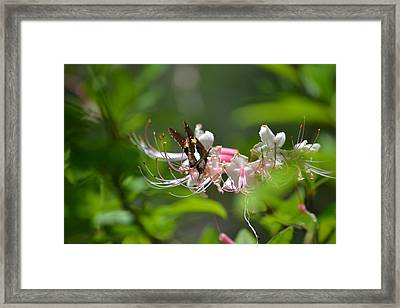 Framed Print featuring the photograph The Visitor by Tara Potts